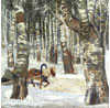 Demidov  Mikhail. Birch Forest in Winter. Art print on canvas