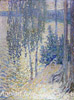 Gaush Alexander. Birches. Art print on canvas - paintings, sale of paintings