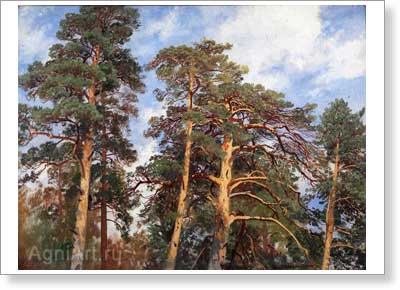 Shishkin Ivan. Tops of Trees. Study. Art print on canvas