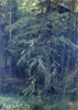 Shishkin Ivan. Fir Tree. Study. Art print on canvas