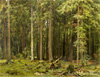 Shishkin Ivan. Forest at Mordvinove. Art print on canvas